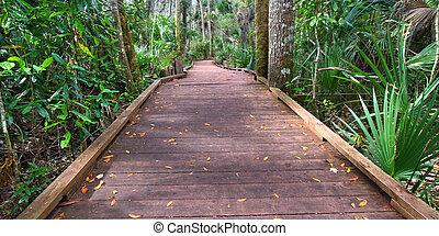 State Park Boardwalk in Florida - Boardwalk through the wet...