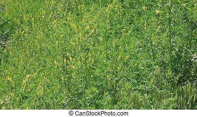 Wild yellow flower background, HD