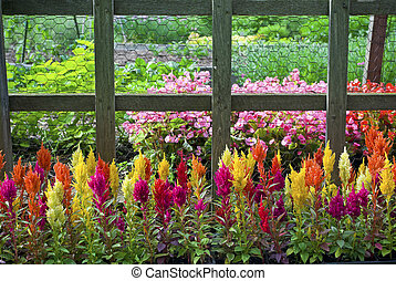 Colorful Annuals - Colorful annual plants along a fence in a...