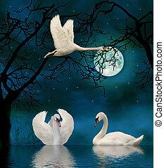 łabędzie, światło księżyca