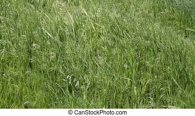 Grass In the Breeze