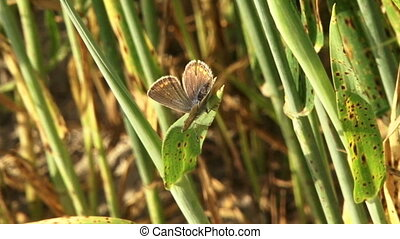 Conventional butterfly - A butterfly sits on a beautiful...