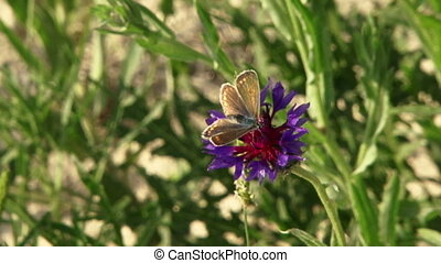 Butterfly on a flower - Beautiful butterfly sits on a...