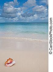 Beige shell on white sand beach near blue ocean in daylight