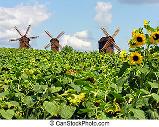 Ukrainian landscape - field of sunflowers and windmills in...