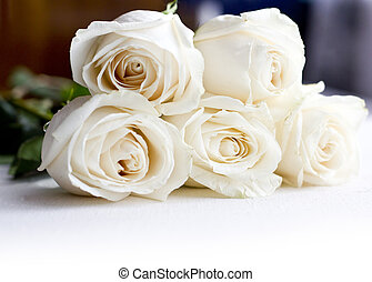 roses on a white background - beautiful roses bud on a white...
