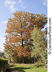 Deciduous trees in autum - The Zeisigwald is an urban forest...