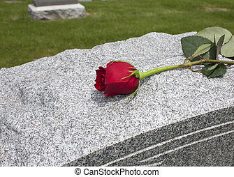 Rose on a Grave - A single rose placed on a grave