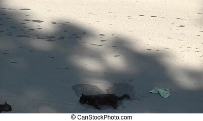 Domestic Cat - death under the wheels