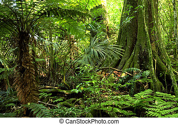 Jungle - Tropical jungle forest