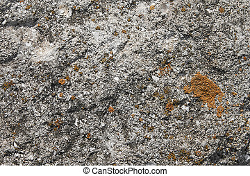 Limestone rock partly coated of lichens