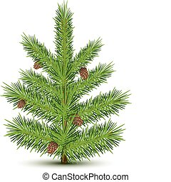 fur-tree - Cones on green christmas fur-tree Isolated object...