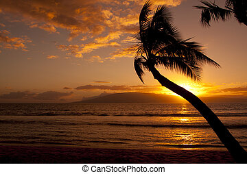 Palm Tree Silhouetted in Sunset