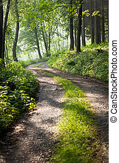 lovelz forest path in early morning sunshine