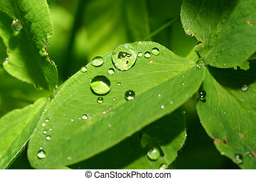 waterdrops on green leaf close up
