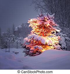 winter pine tree - xmas winter pine tree in dark