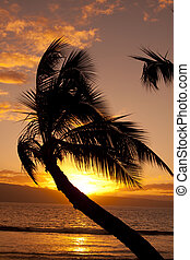 Wind Blown Palm in Sunset - a wind blown palm tree...