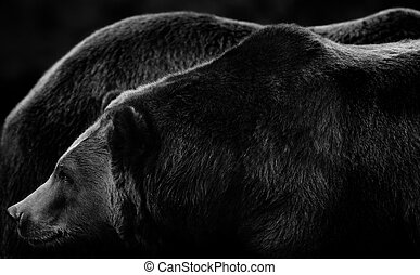Bearscapes - Giant sized Alaskan brown bears in subtle black...
