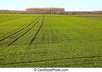 Field - Agricultural field