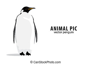 Pinguin - Illustration of a pinguin on white background