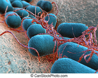 Escherichia coli bacterium - High resolution 3d render of...