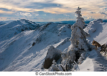 Carpathians (Romania) - Mountain landscape in Carpathians...