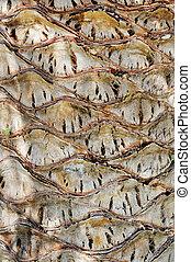 Palm tree bark - full frame