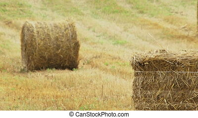 Agriculture - Two haystacks lie in the middle of a dry...