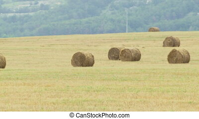 Harvested field - A large amount of hay lying on the field...