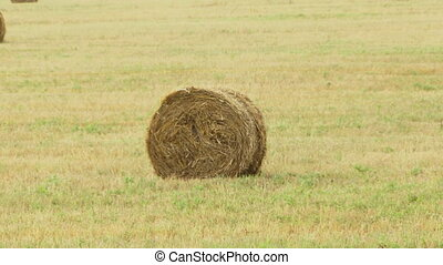Haystack - Hay wrapped in a haystack of lies all over the...