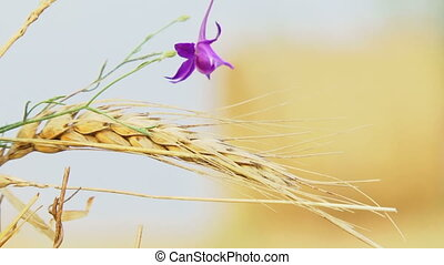 Flower among the crop