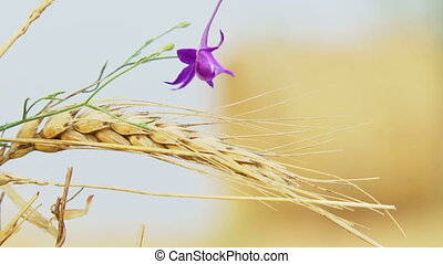 Flower on a background of hay