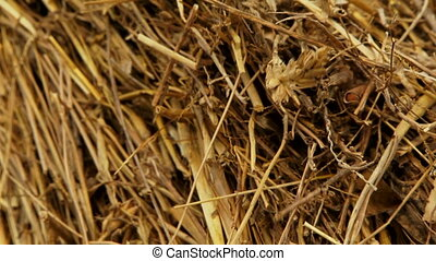 Pile of hay - Crop residues are collected in a haystack.