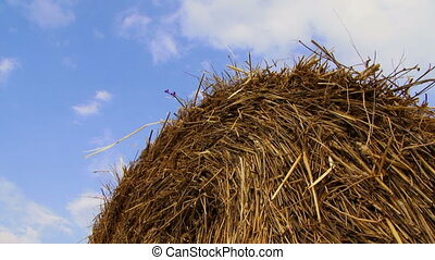 Hay against the sky - Large haystack lies on the background...