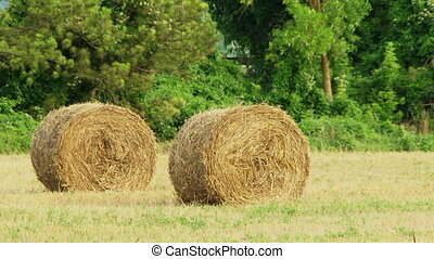 Two haystacks in the field