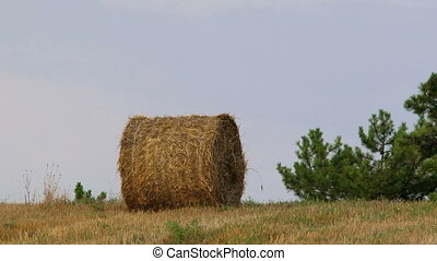 Haystack in the field - Hay wrapped in a haystack of lies...