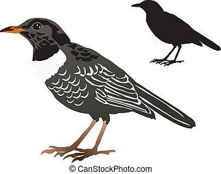 blackbird - vector image of the blackbird