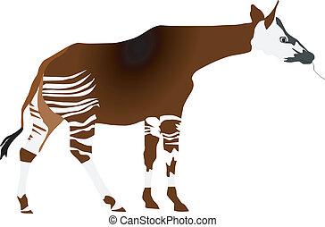 vectors okapi on a white background