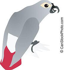 parrot Jaco