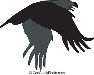 Steppe Eagle on white background