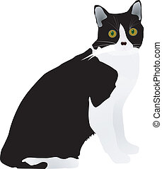 black cat - vector black cat