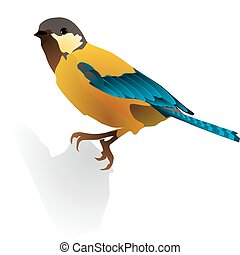 image of a beautiful bird
