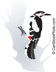 woodpecker - vectors woodpecker