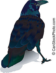 crow - vector image of a crow