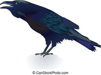 vector crow - vector image of a crow