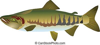 vectors, salmão