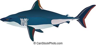 shark - vectors shark