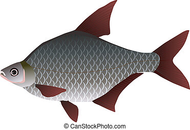 vectors bream on a white background