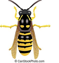 vectors wasp on a white background