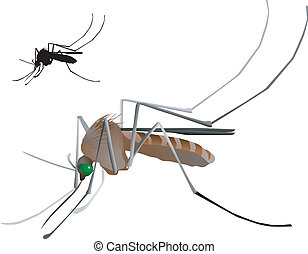 vectors mosquito on a white background